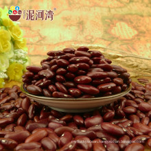 Best selling red kidney beans scientific name of beans
